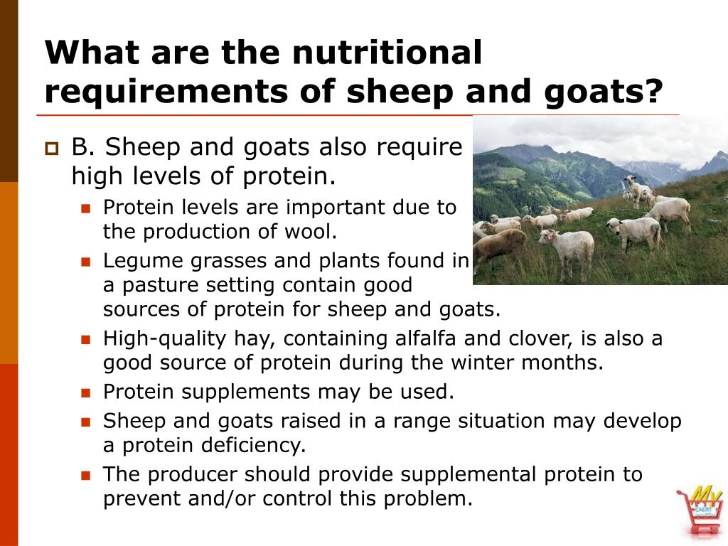 What are the nutritional requirements of sheep and goats?