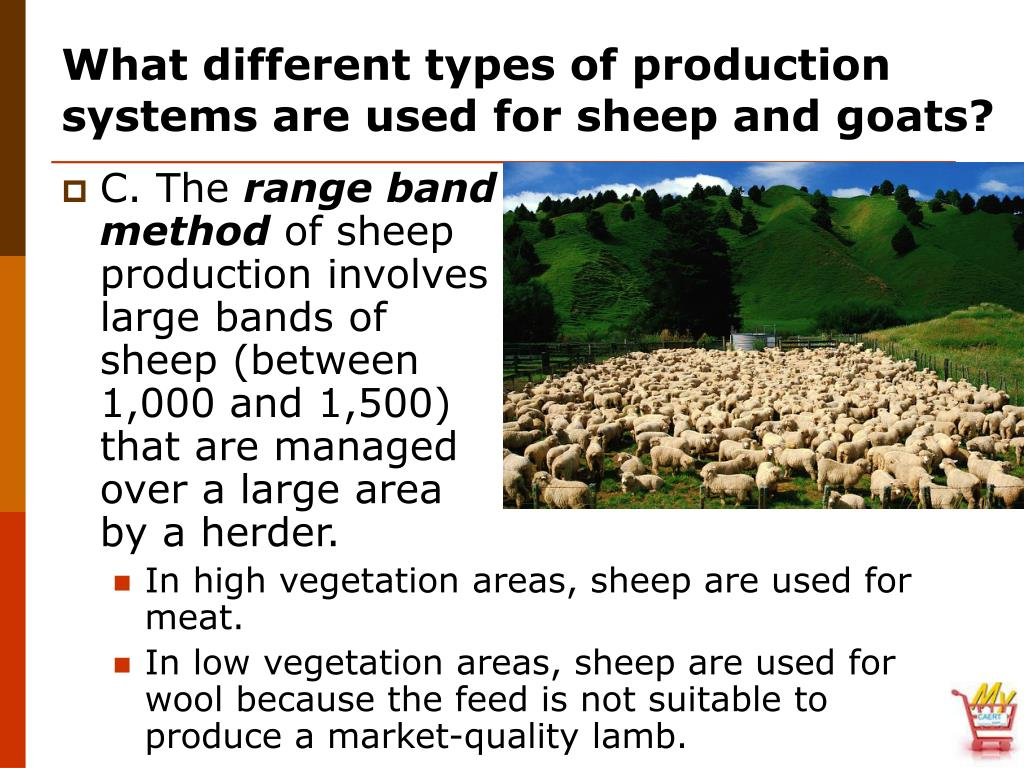 What different types of production systems are used for sheep and goats?