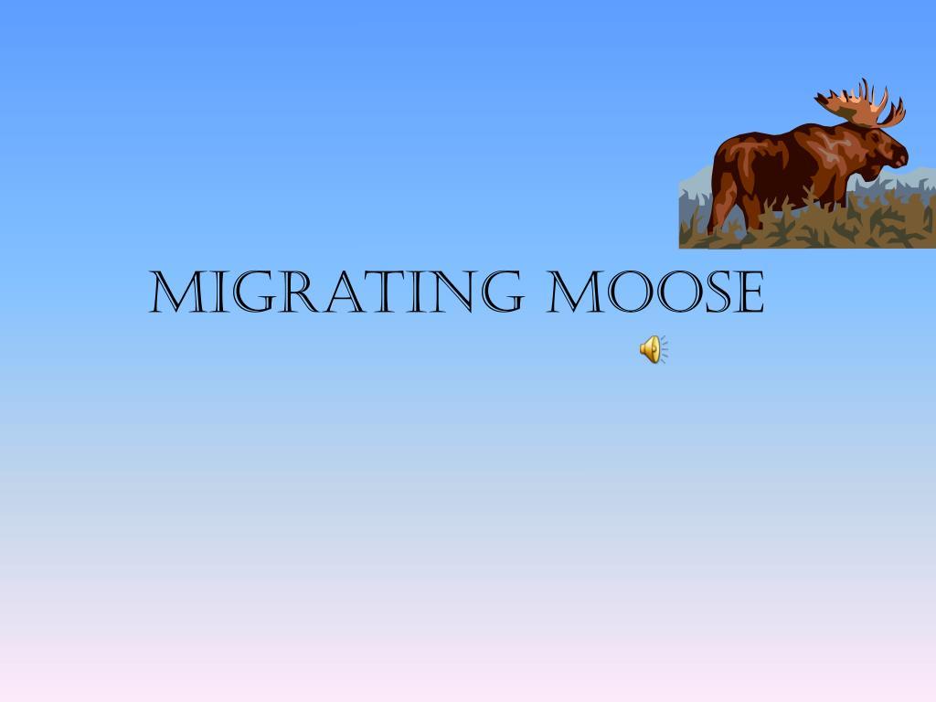 migrating moose l.