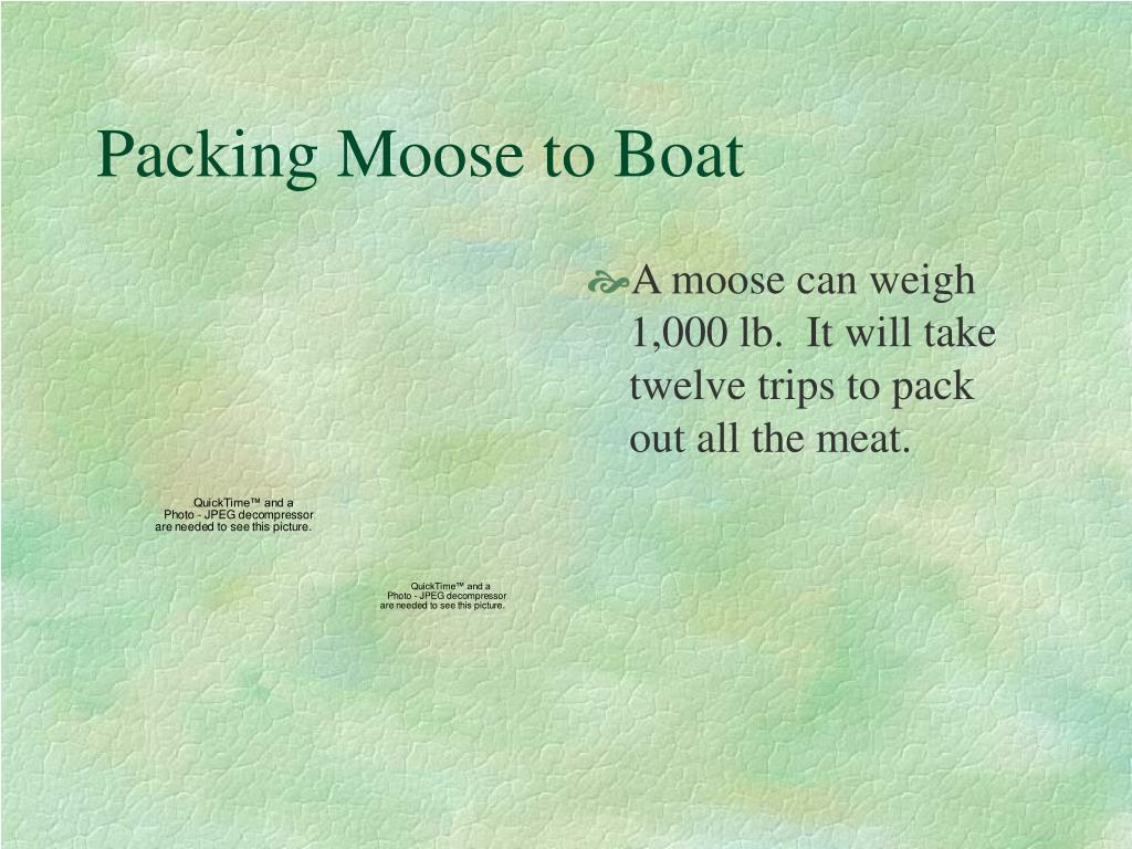 Packing Moose to Boat