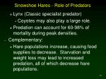 snowshoe hares role of predators