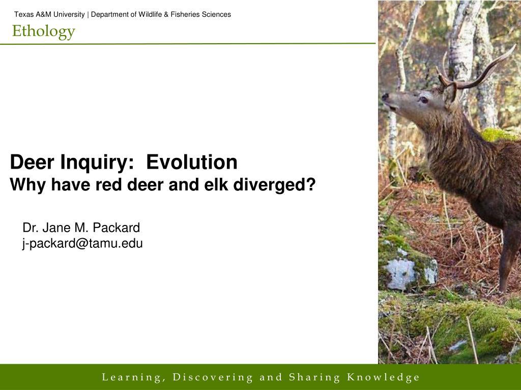deer inquiry evolution why have red deer and elk diverged l.