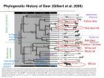 phylogenetic history of deer gilbert et al 2006