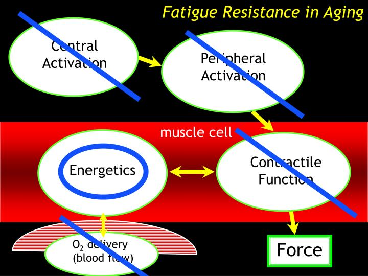 Fatigue Resistance in Aging