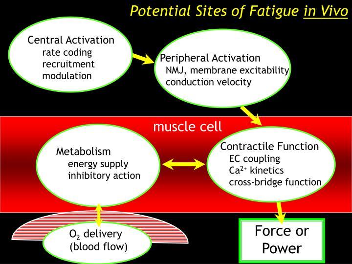 Potential Sites of Fatigue