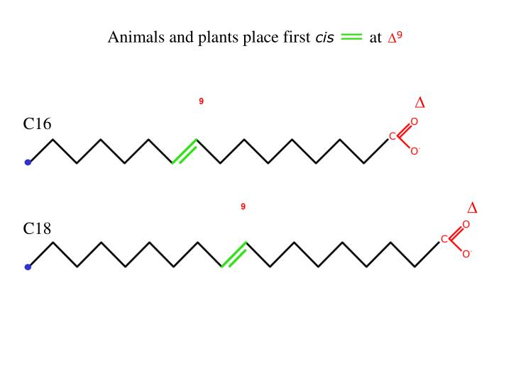 Animals and plants place first