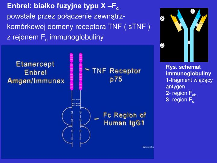 Enbrel: białko fuzyjne typu X –F