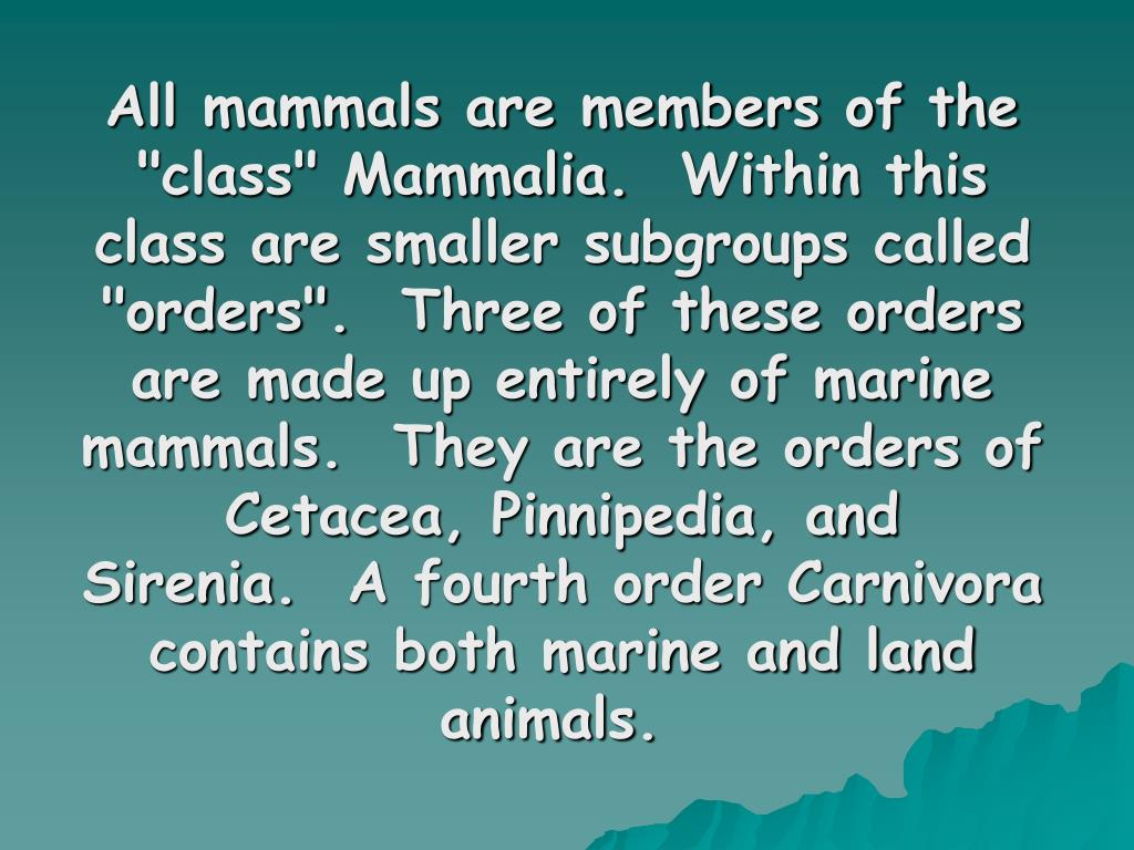 """All mammals are members of the """"class"""" Mammalia. Within this class are smaller subgroups called """"orders"""". Three of these orders are made up entirely of marine mammals. They are the orders of Cetacea, Pinnipedia, and Sirenia. A fourth order Carnivora contains both marine and land animals."""