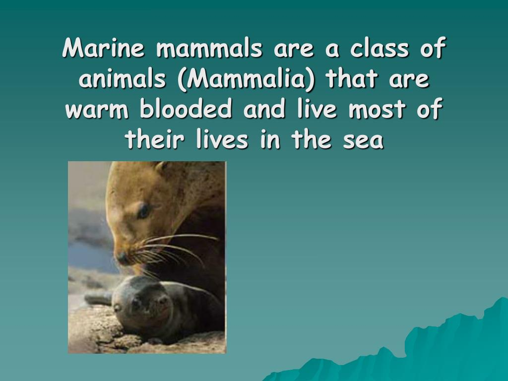 Marine mammals are a class of animals (Mammalia) that are warm blooded and live most of their lives in the sea