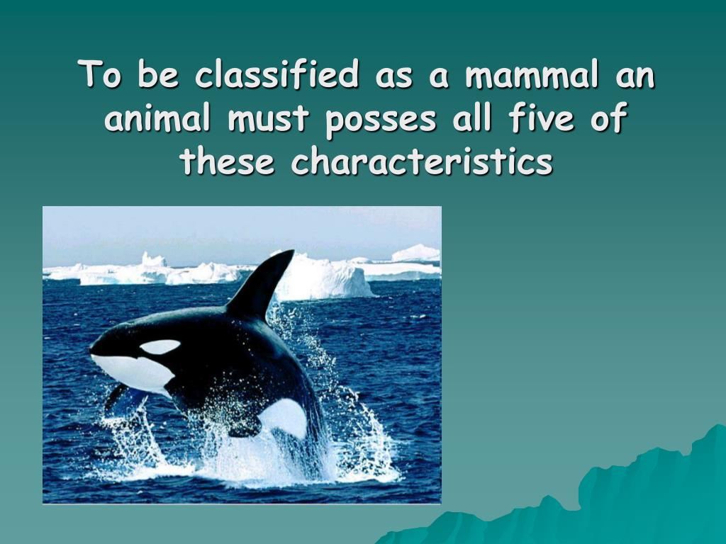 To be classified as a mammal an animal must posses all five of these characteristics