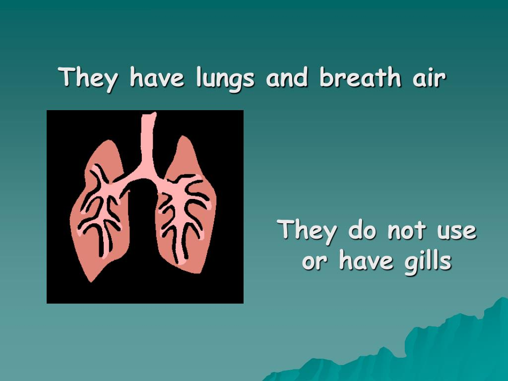 They have lungs and breath air