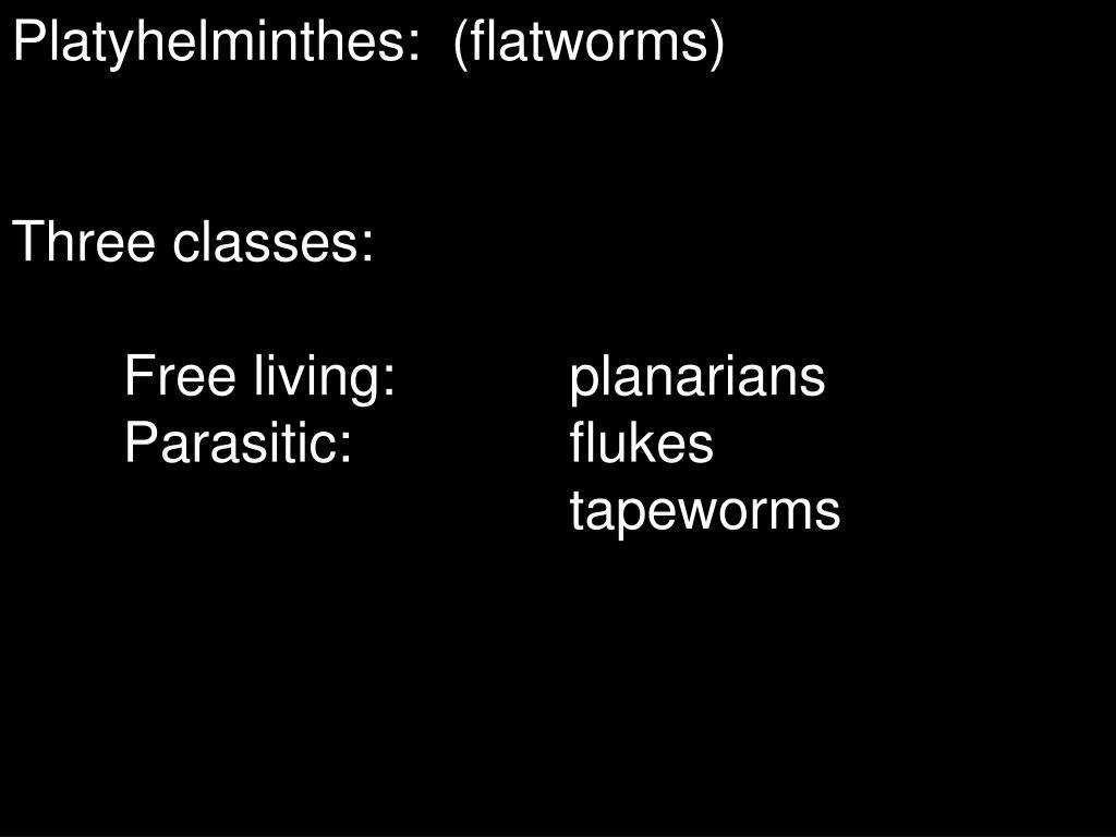 Phylum:Platyhelminthes
