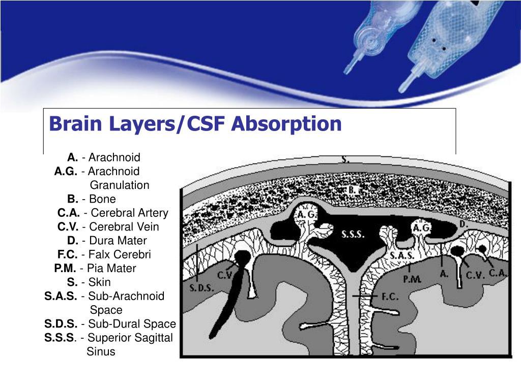 Brain Layers/CSF Absorption