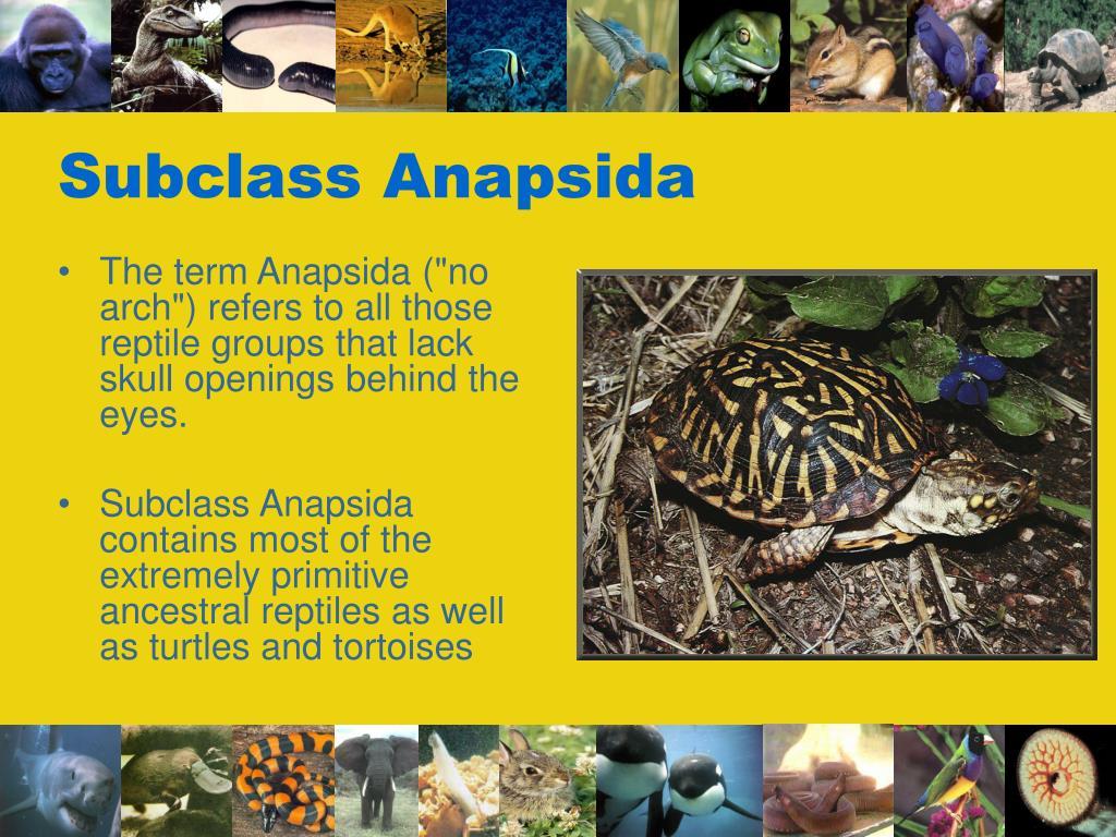 Subclass Anapsida