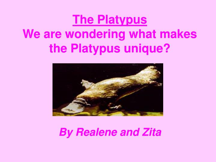 the platypus we are wondering what makes the platypus unique n.