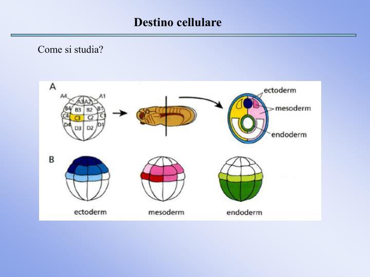 Destino cellulare
