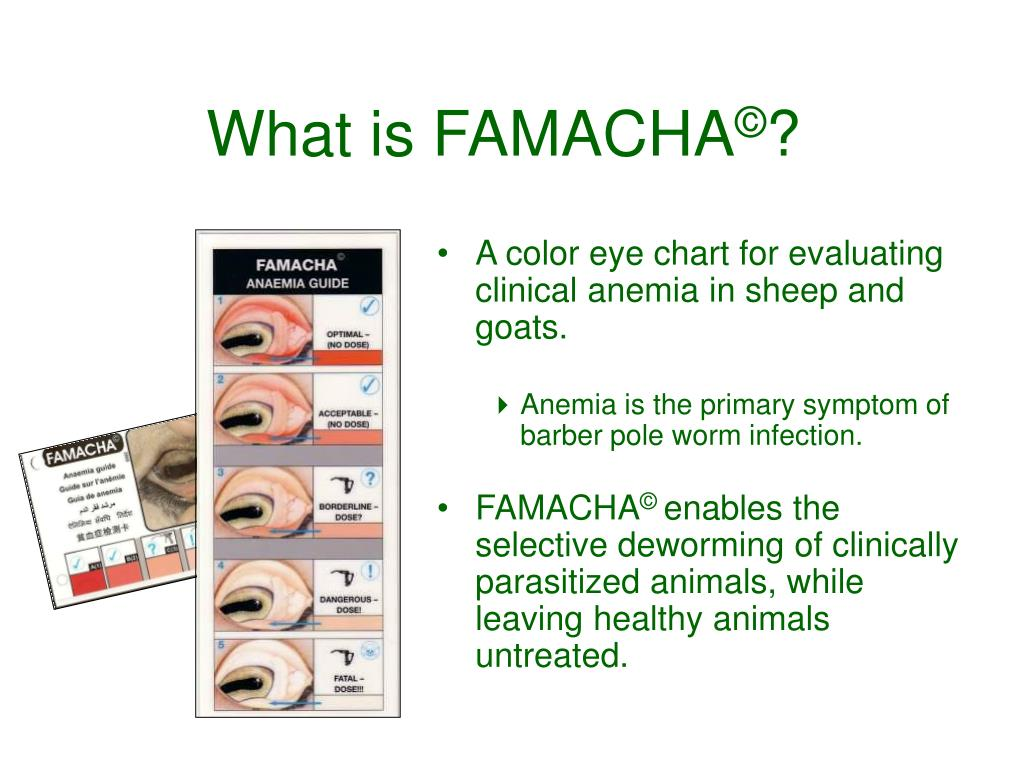 A color eye chart for evaluating clinical anemia in sheep and goats.