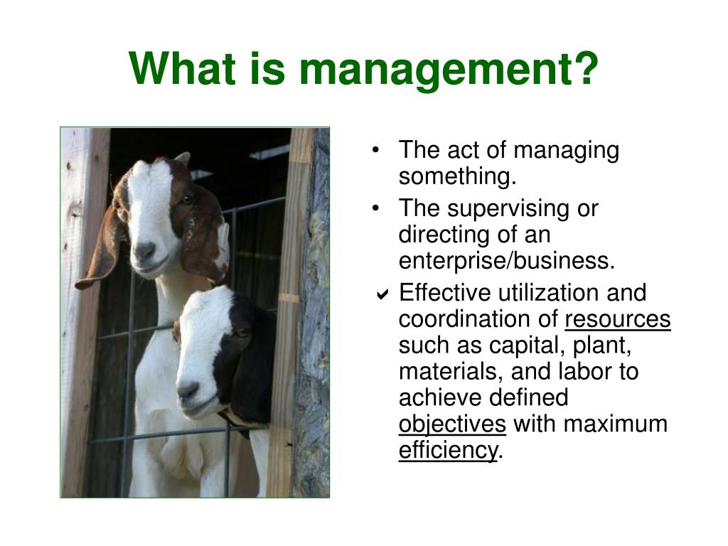 The act of managing something.