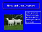 sheep and goat overview15
