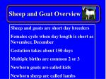 sheep and goat overview16