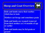 sheep and goat overview17