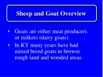 sheep and goat overview2