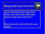 sheep and goat overview21