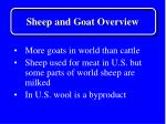 sheep and goat overview4