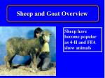 sheep and goat overview7