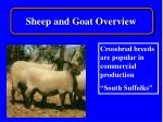 sheep and goat overview8