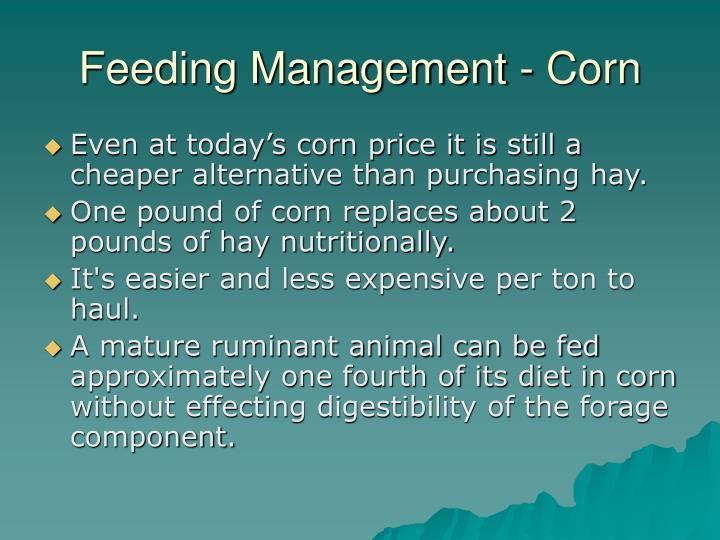 Feeding management corn
