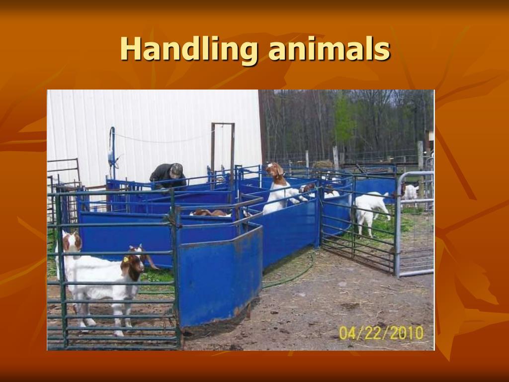 Handling animals