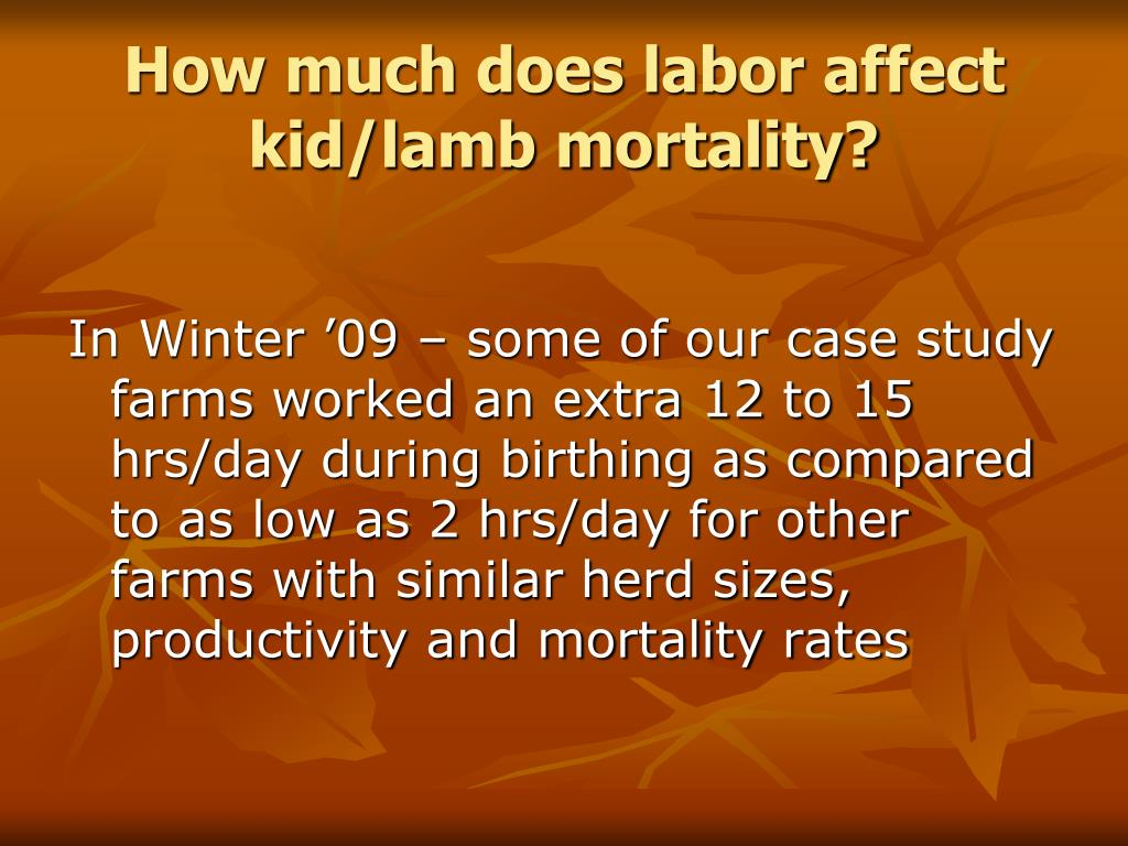 How much does labor affect kid/lamb mortality?