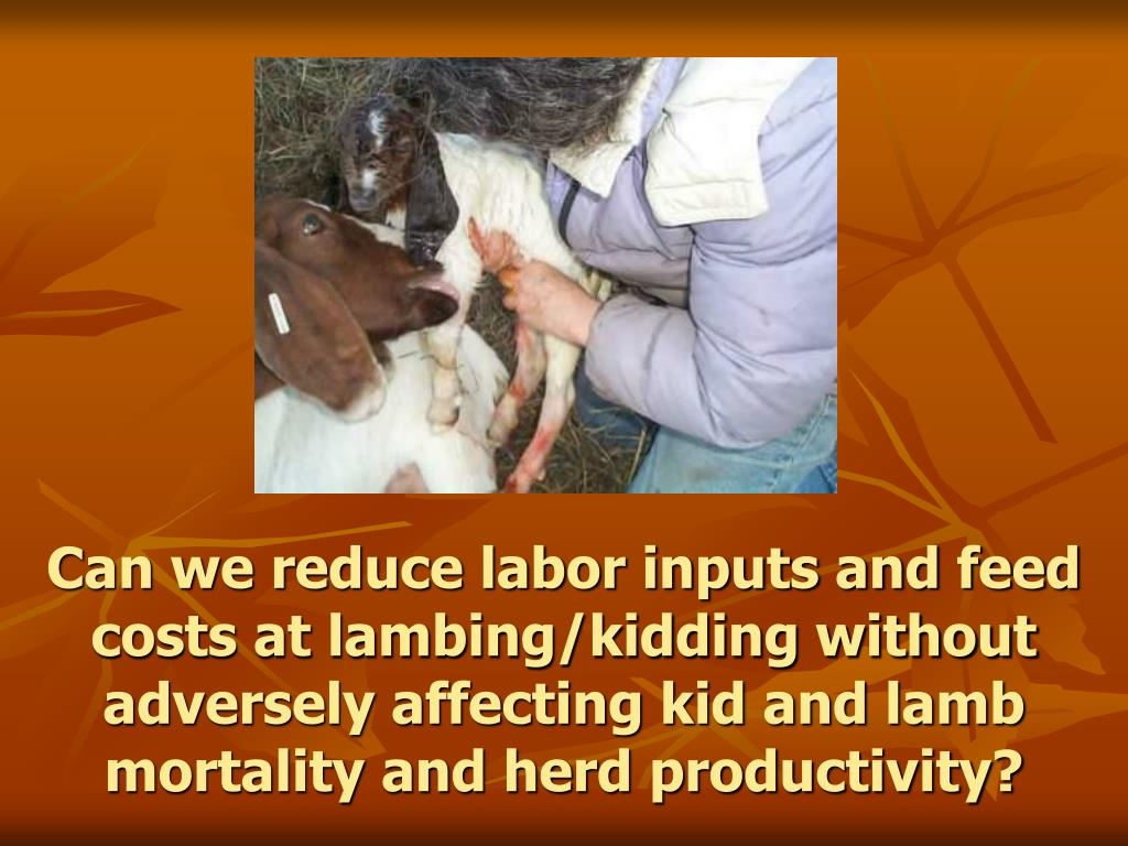 Can we reduce labor inputs and feed costs at lambing/kidding without adversely affecting kid and lamb mortality and herd productivity?