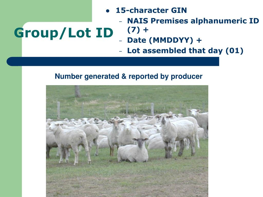 Group/Lot ID