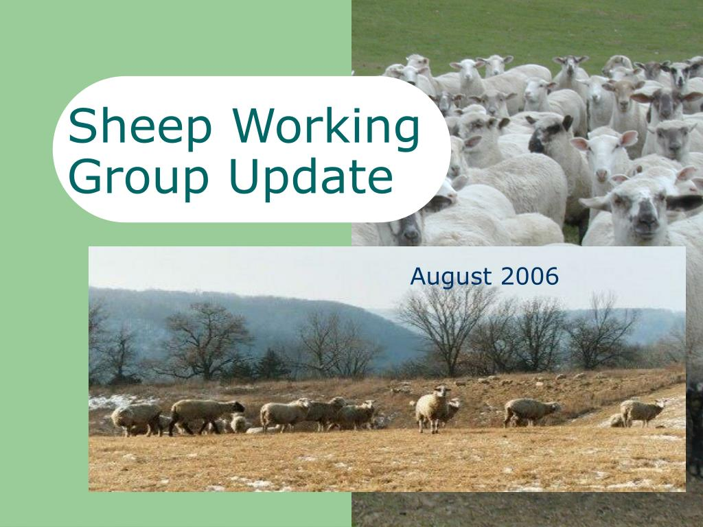 sheep working group update l.