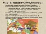 sheep domesticated 11 000 15 000 years ago