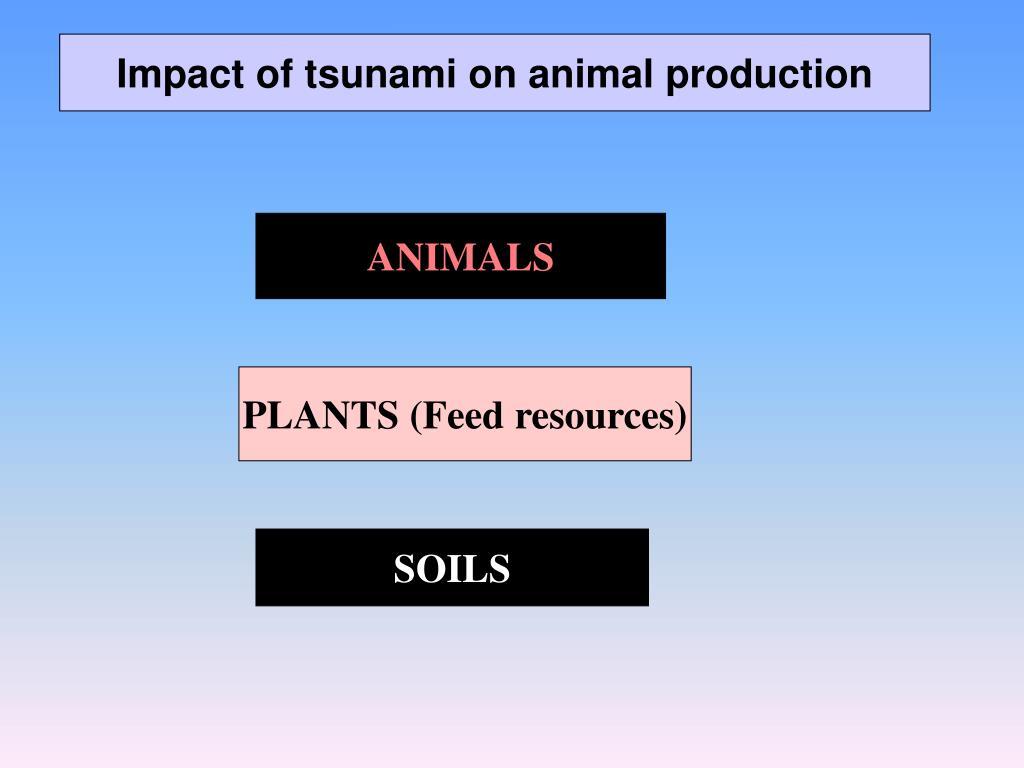 Impact of tsunami on animal production