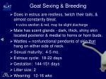 goat sexing breeding