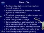 sheep diet