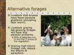 alternative forages