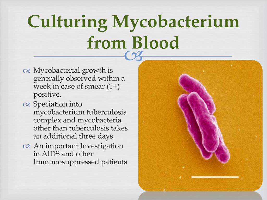Culturing Mycobacterium from Blood
