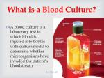 what is a blood culture