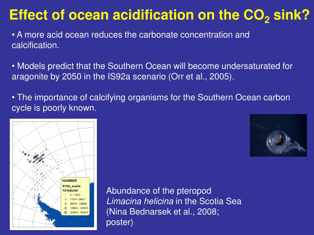 Effect of ocean acidification on the CO