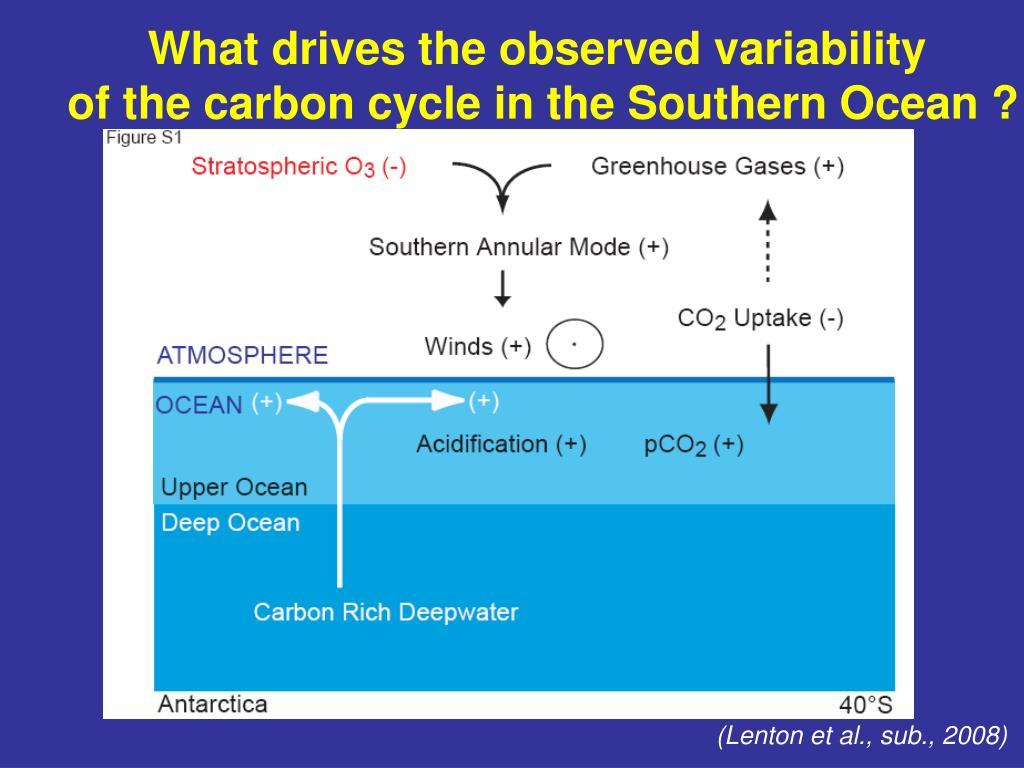 What drives the observed variability