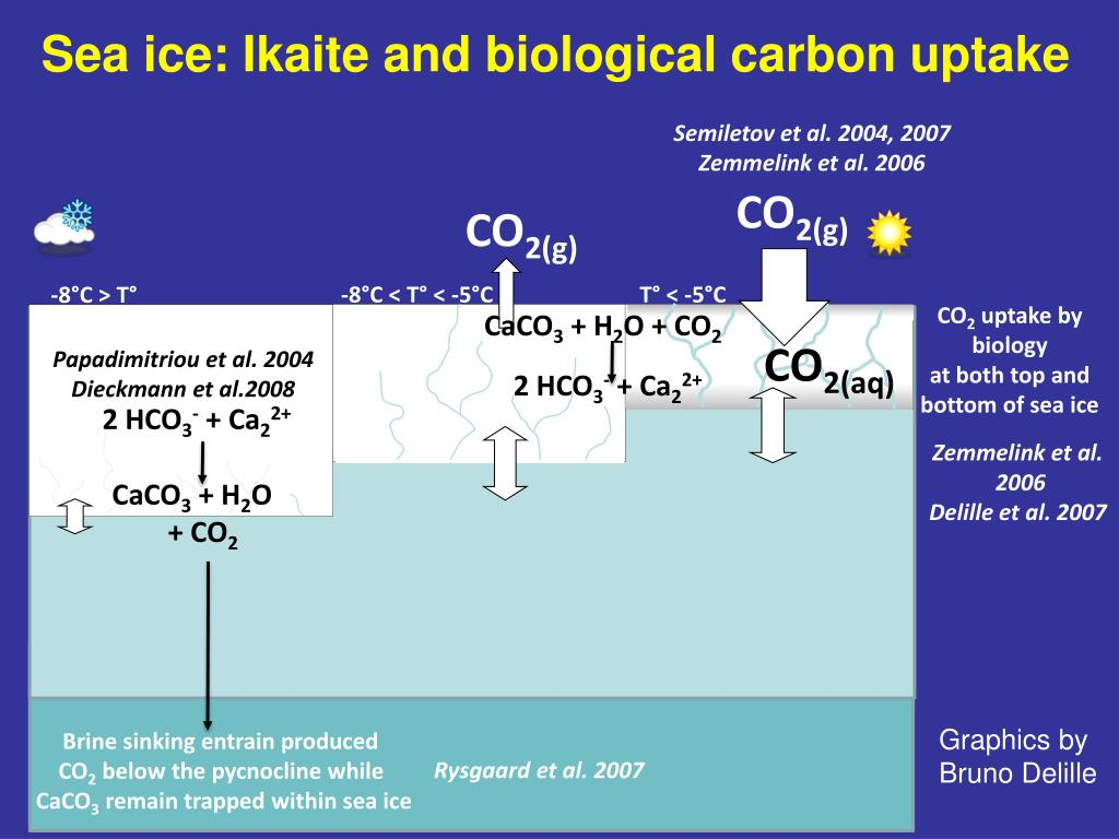 Sea ice: Ikaite and biological carbon uptake