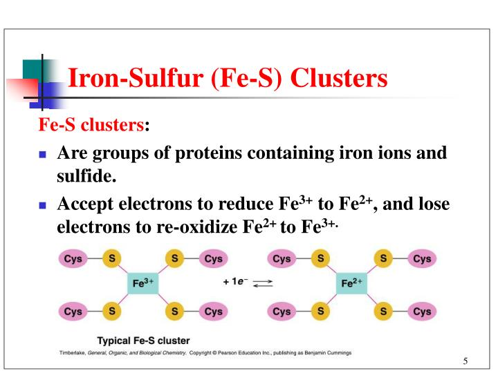 Iron-Sulfur (Fe-S) Clusters