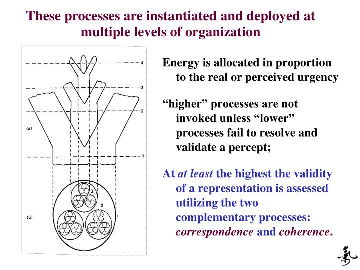 These processes are instantiated and deployed at multiple levels of organization