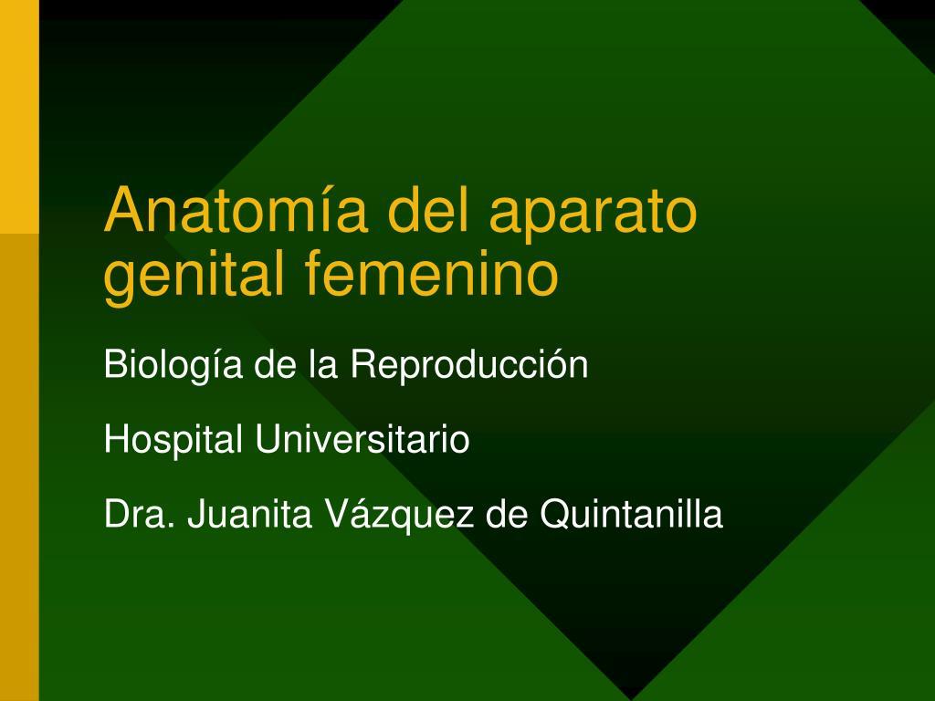 PPT - Anatomía del aparato genital femenino PowerPoint Presentation ...