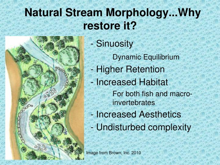 Natural Stream Morphology...Why restore it?